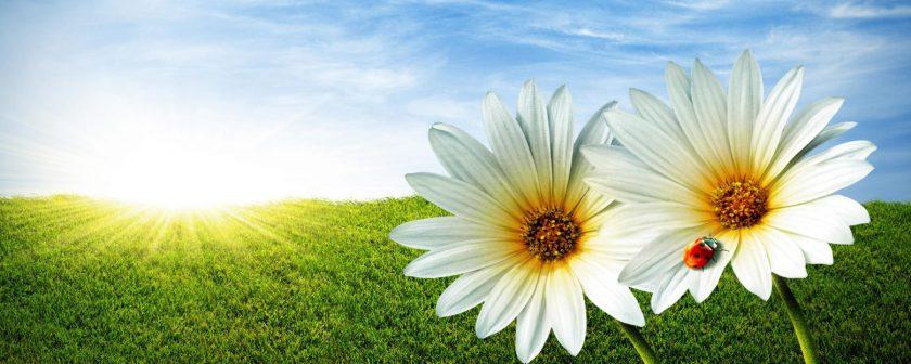 cropped-spring3.jpg