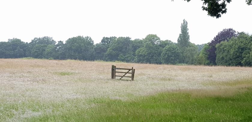 gate-in-field